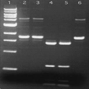 DNA cleavage assay