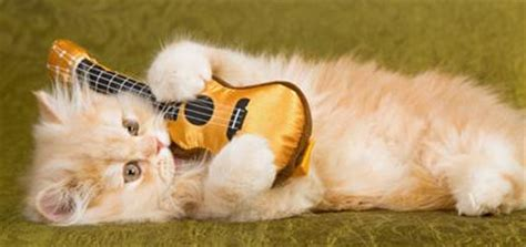 Songs About Cats: Catster's Top 20 Kitty Tracks - Catster