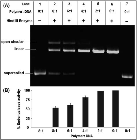 Cleavage efficiency of restriction endonuclease Hind III